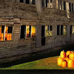 Who's Scaring Who? by Dorothy Koval - Public Holidays Halloween ( scary, autumn light, chicken coop, pumpkins, scaring, reflections, windows, vermont farm, halloween )