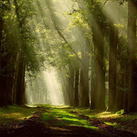 by Gert de Vos - Landscapes Forests
