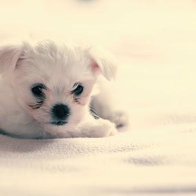 Flek by Mario Novak - Animals - Dogs Puppies