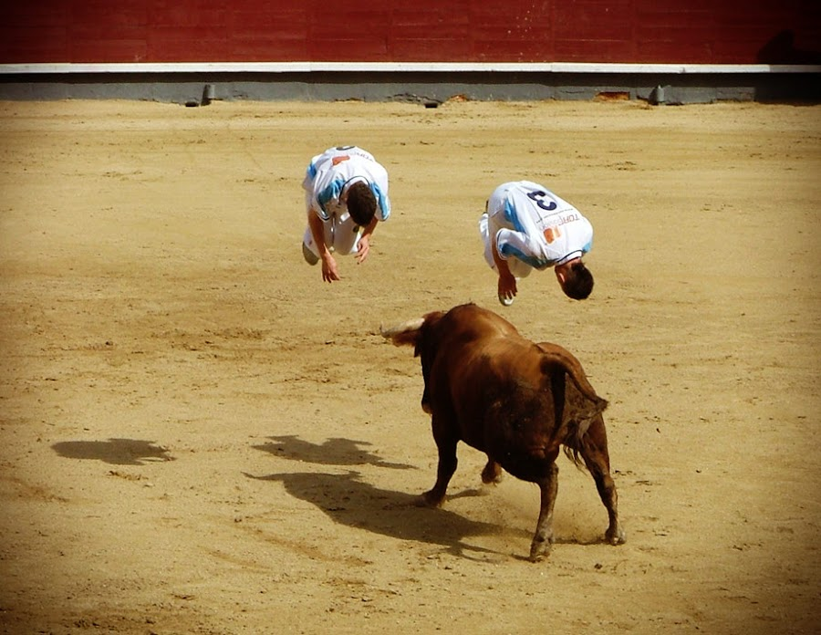 Double somersault over the bull by Valentyn Kolesnyk - News & Events World Events ( rekorte, boldness, courage, bull, agility )