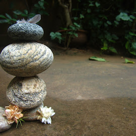 zen stones by Shreya Bansal - Novices Only Objects & Still Life ( water, nature, still life, greenery, outdoor, zen, stones, flowers, objects, feather )