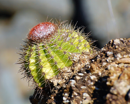 by Donna Van Horn - Nature Up Close Other plants (  )