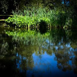 Mirror by Janete Ribeiro - City,  Street & Park  City Parks ( mirror, park, green, lake, landscape )