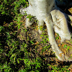 Tree foot by Mark Luyt - Nature Up Close Trees & Bushes ( looking down, nature, tree, roots, trunk )