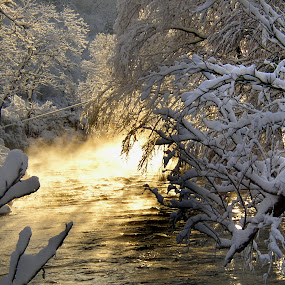 Snow Light by Dorothy Koval - Nature Up Close Trees & Bushes ( pwcfoulweather-dq, snowstorm, frozen branches, ice, vermont stream, snow light, after storm, mist, Tree, Nature, Sky )