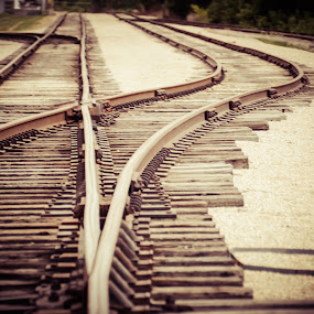 And our paths diverge by Kate Anthony - Transportation Trains ( train tracks, railroad tracks, two roads, still life, train, transportation, arkansas )