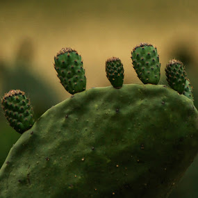 Cactus family by Cristobal Garciaferro Rubio - Nature Up Close Other plants ( tuna, family, nopal, bokeh, cactus )