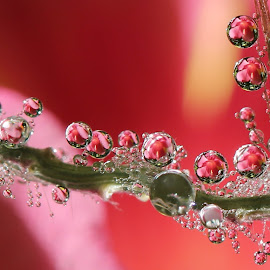 I never thought that dreams came true by Lala Fuad - Nature Up Close Natural Waterdrops