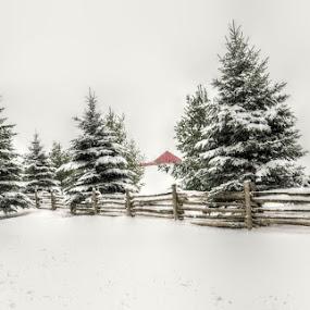 Winter by Debbie Johnson MacArthur - Uncategorized All Uncategorized