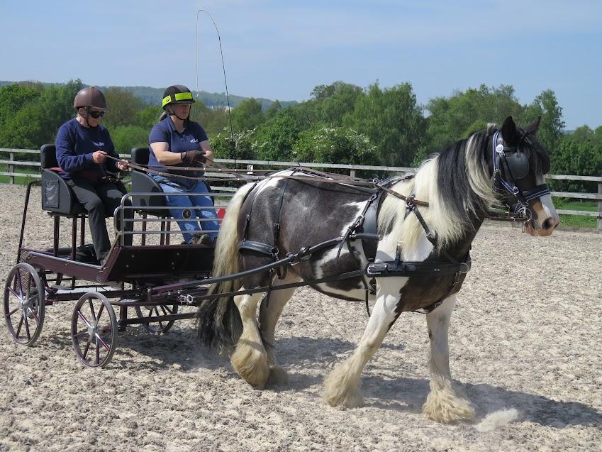 Carriage driving at Bradbourne RDA