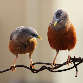 Wher's your Tail by Mrinmoy Ghosh - Animals Birds (  )
