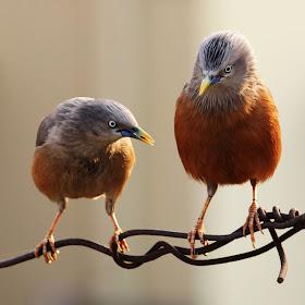 Dual Birds.jpg