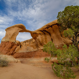 Arch and Tree by Jerry Cahill - Landscapes Caves & Formations