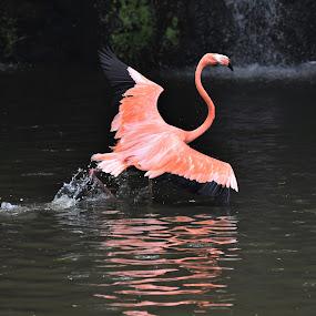 by Koh Chip Whye - Animals Birds (  )