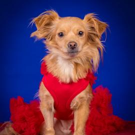 by Myra Brizendine Wilson - Animals - Dogs Portraits ( canine, pet, dog, animal,  )