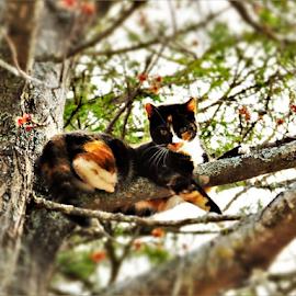 by Rachelle MacDonald - Animals - Cats Portraits (  )