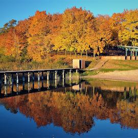 Gold autumn by Tomasz Budziak - City,  Street & Park  City Parks ( city, reflections, autumn colors, city park, autumn )
