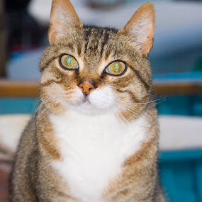 by Gale Perry - Animals - Cats Portraits ( cat, sitting, electric green eyes, boatyard, white,  )