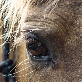 Horse by Jenn Moss - Animals Horses ( equine, horse, eye )