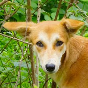 by Mahesh Gadekar - Animals - Dogs Portraits (  )