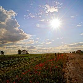 Countryside by Agnieszka Wasicka - Landscapes Prairies, Meadows & Fields