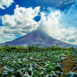 blue sky by Kriswanto Ginting's - Landscapes Mountains & Hills ( blue sky, indonesia, volcanoes, landscape photography, landscapes, sinabung,  )