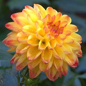 October Bloom #1 by Cal Brown - Flowers Single Flower ( fall colors, single flower, fall, october, yellow flower, flower )