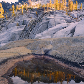 Larches Reflected in Pothole by Rakesh Malik - Landscapes Mountains & Hills ( enchantments, natureoutdoor, lake, hiking, larches, fall color, alpine, backpacking, adventure, tree, nature, autumn, outdoor, larch )