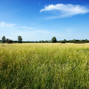 Podolec by Marina Jambrec - Landscapes Prairies, Meadows & Fields ( jambrec, marina, photography )
