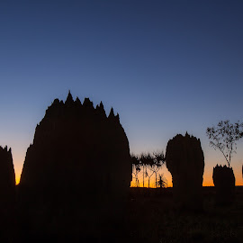 Magnetic Termite Mounds by David Millard - Nature Up Close Hives & Nests ( park, national, silhouette, mounds, sunrise, magnetic, litchfield, darwin, termite )