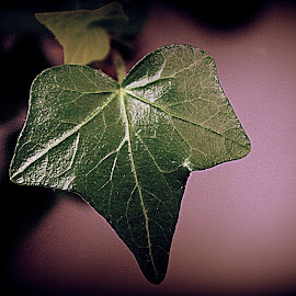 Detailed leaf by Laura Horne - Nature Up Close Leaves & Grasses