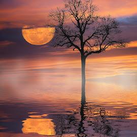 Reflective Moon.  by Kim Jones - Digital Art Places ( orange, reflection, moon, tree, sunset, glow )