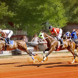 In the Lead by Jeannie Meyer - Animals Horses ( neshoba county fair, horse, horse races, races, fair )