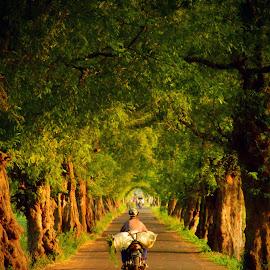 Get the rice by Ubaidillah Elmuddin - People Street & Candids ( rice, tree, get, sunset, people, sun )