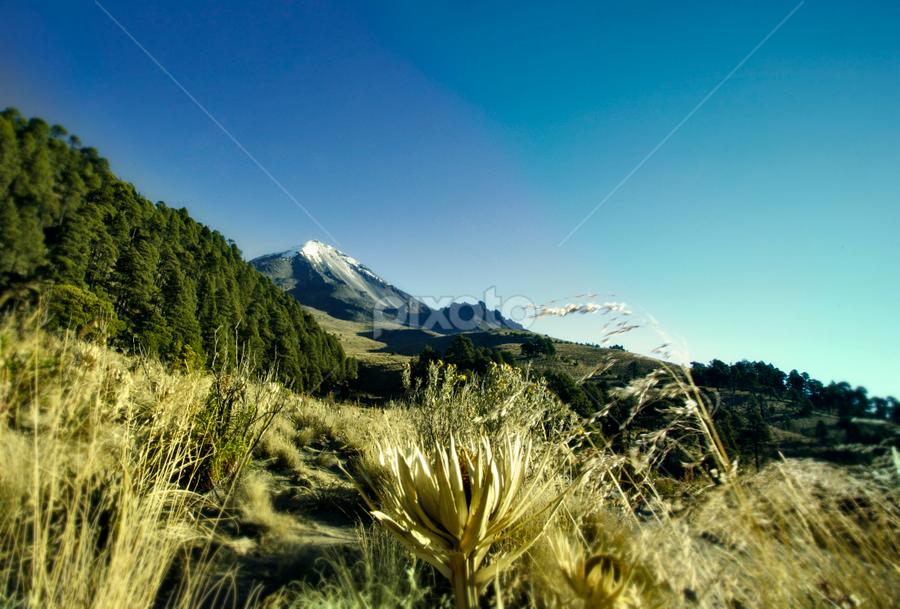 Field and volcano by Cristobal Garciaferro Rubio - Landscapes Mountains & Hills ( volcan, mexico, pico de orizaba, citlaltepetl, snowy volcano, veracruz )