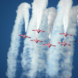 Snowbirds by Constance Auclair - Transportation Airplanes ( airplanes, snowbirds, airplane, blue skies, transportation, red planes, planes, smoke, airshow, formation )