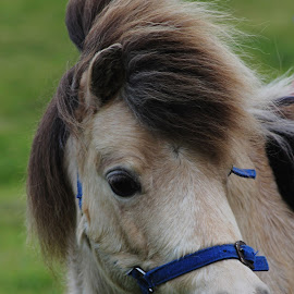 Pony by Elise Graham - Animals Horses ( pony, mane, horse, adorable, cute )
