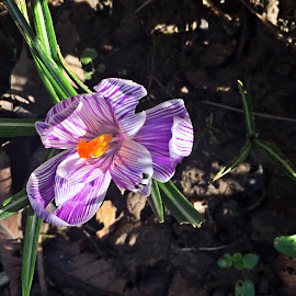 Brandusa by Dobrin Anca - Instagram & Mobile iPhone ( green, street, brittany, garden, flower )