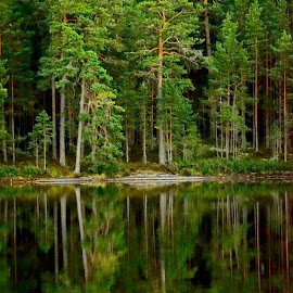Silence by Alf Winnaess - Landscapes Forests