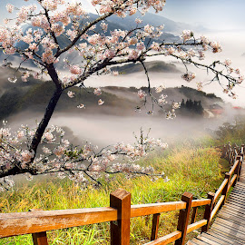 Walking in Japan by Jerry Kambeitz - Landscapes Prairies, Meadows & Fields ( cherry, stairs, japan, blossom, mist )