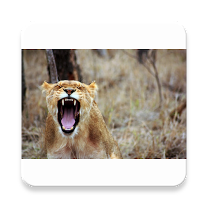Animals-Lion-King2