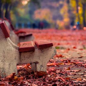 my autumn leaves by Cornelius D - City,  Street & Park  City Parks