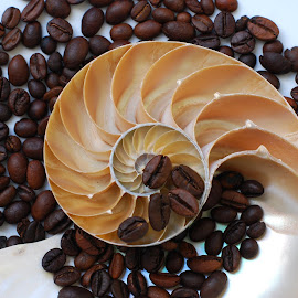 coffee beans by Adjie Tjokrosoedarmo - Artistic Objects Still Life ( coffee, seashell, sea, nautilus, beach )