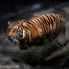 Fog by William Underwood  - Digital Art Animals