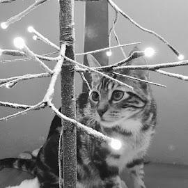 Bright Eyes by Lori Fix - Black & White Animals