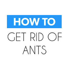 How To Get Rid of Ants‏‎ Fast