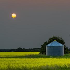 Orange Sun and Grain Bin by Dave Lipchen - Landscapes Prairies, Meadows & Fields ( canola field, grain bin, greay sky, landscape, sun )