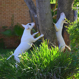 by Melody Pieterse - Animals - Dogs Playing