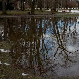 park by Dušan Gajšek - Nature Up Close Water ( voda, odsev, _mesta, narava, maribor, park )