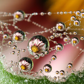 Thinking of you till it hurts by Lala Fuad - Nature Up Close Natural Waterdrops